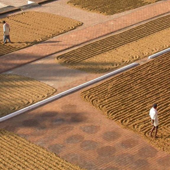 banner-piantagioni-del-caffe-576x576